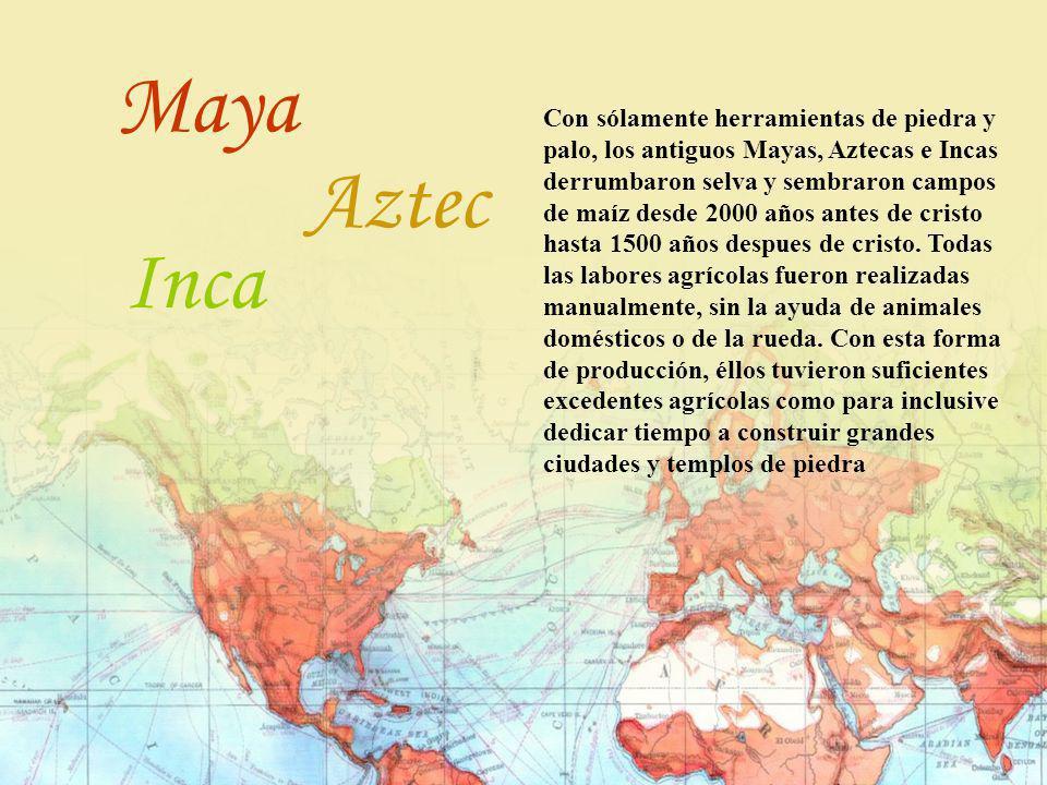 Con sólamente herramientas de piedra y palo, los antiguos Mayas, Aztecas e Incas derrumbaron selva y sembraron campos de maíz desde 2000 años antes de