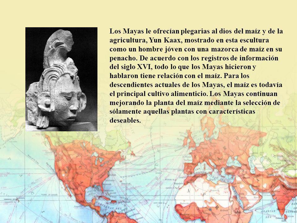 Los Mayas le ofrecían plegarias al dios del maíz y de la agricultura, Yun Kaax, mostrado en esta escultura como un hombre jóven con una mazorca de maí