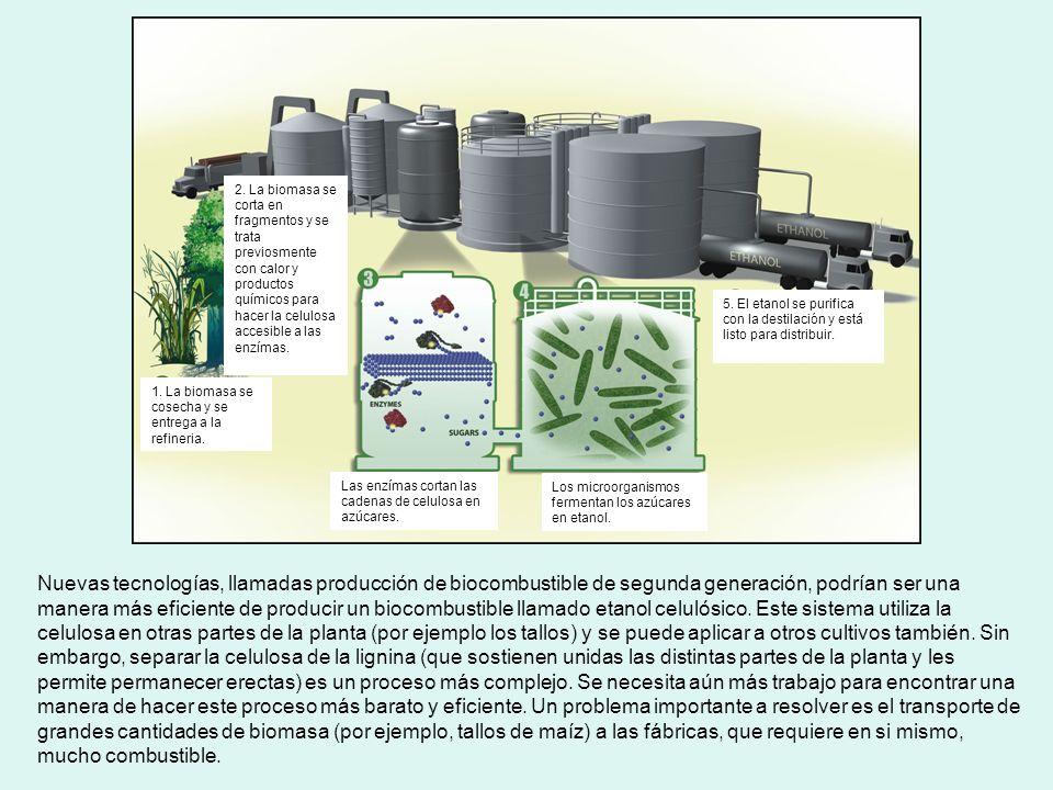 Nuevas tecnologías, llamadas producción de biocombustible de segunda generación, podrían ser una manera más eficiente de producir un biocombustible ll