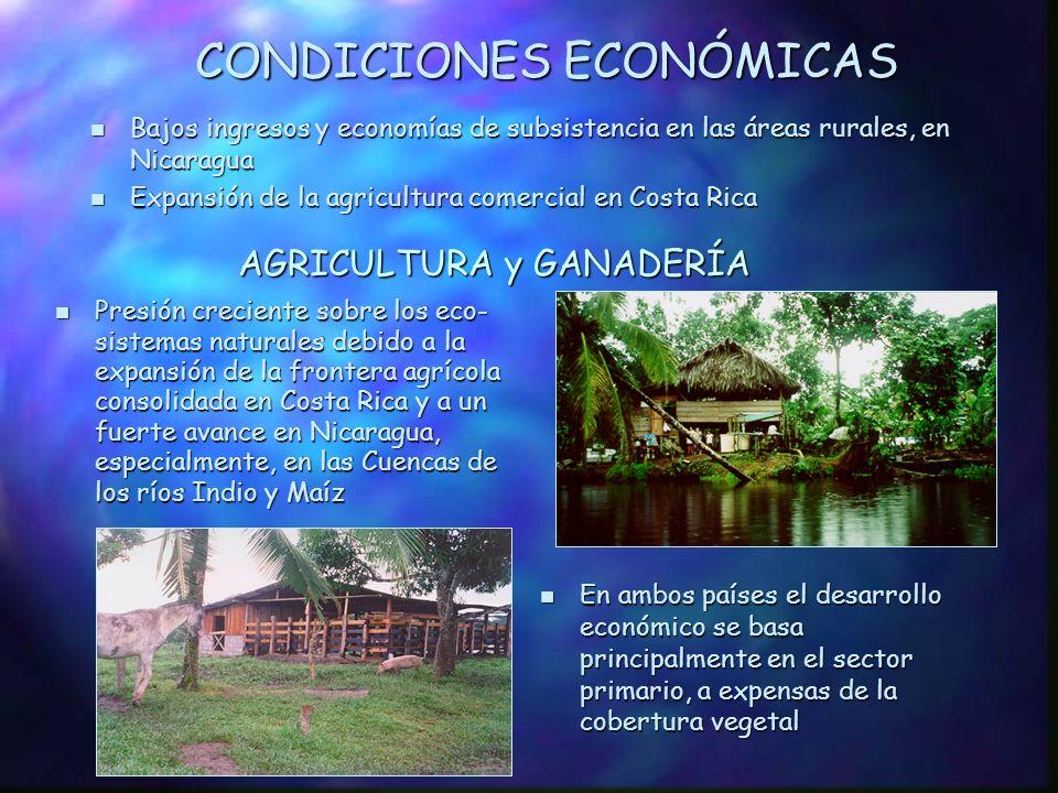 POBLACIÓN Población total: 1.068.152 habitantes, de los cuales, 73% reside en Nicaragua Población total: 1.068.152 habitantes, de los cuales, 73% reside en Nicaragua n En Nicaragua, Densidad: 46 h/Km 2 55% rural 55% rural n En Costa Rica, Densidad: 22 h/Km 2 85% rural 85% rural n Elevado crecimiento de la población Patrones migratorios incontrolados Patrones migratorios incontrolados n Indice de crecimiento medio anual de la población -4,1%/año (Nicaragua) -3,7%/año (Costa Rica)