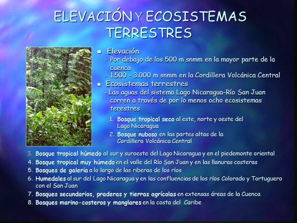RECURSOS HÍDRICOS n Lluvia media anual: 1.500 - 6.000 mm n Caudal del Río San Juan - 475 m 3 /s en la salida del Lago Nicaragua - 1.308 m 3 /s en la desembocadura n Aguas subterráneas abundantes y de alta calidad