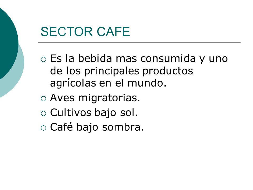 SECTOR CAFE Es la bebida mas consumida y uno de los principales productos agrícolas en el mundo. Aves migratorias. Cultivos bajo sol. Café bajo sombra