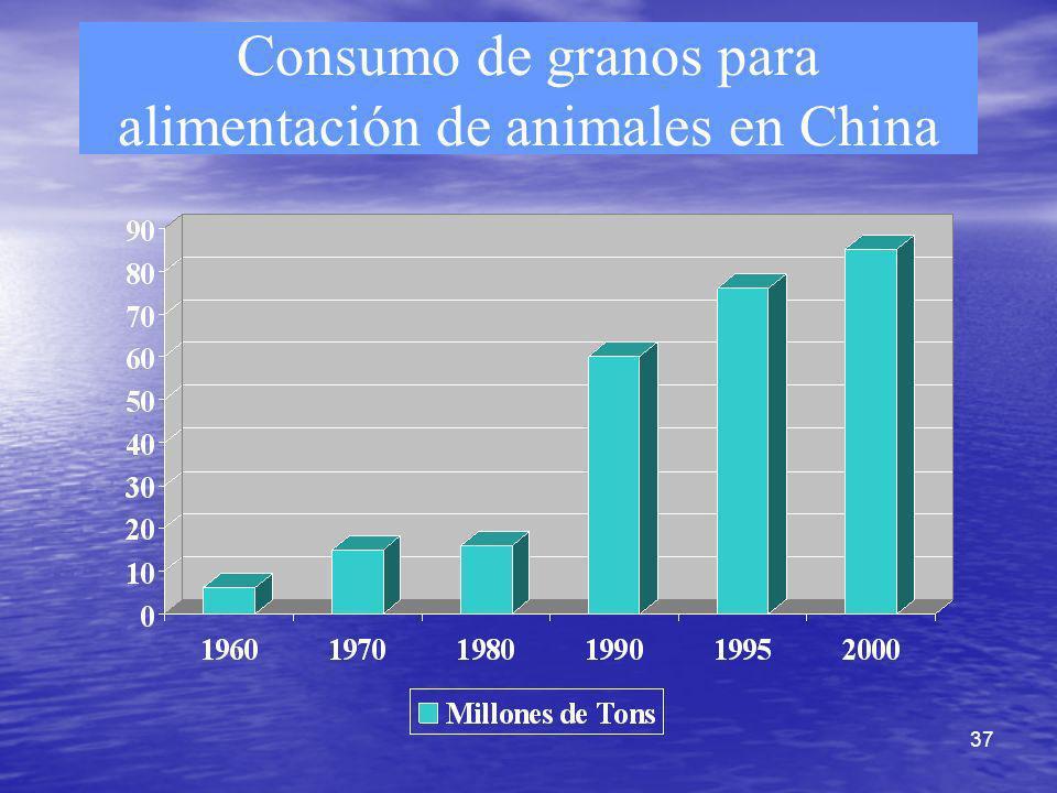 37 Consumo de granos para alimentación de animales en China
