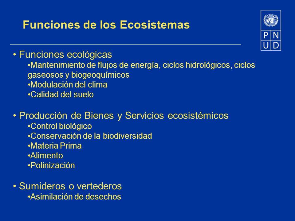 Funciones de los Ecosistemas Funciones ecológicas Mantenimiento de flujos de energía, ciclos hidrológicos, ciclos gaseosos y biogeoquímicos Modulación