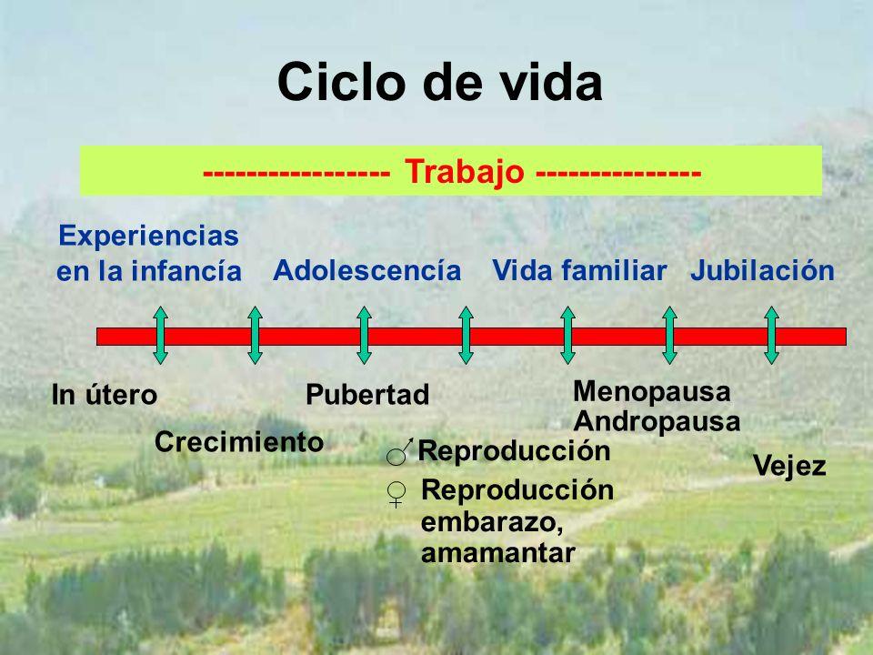 Ciclo de vida In útero Crecimiento Pubertad Reproducción Vejez Experiencias en la infancía AdolescencíaVida familiarJubilación Menopausa Andropausa Reproducción embarazo, amamantar ----------------- Trabajo ---------------