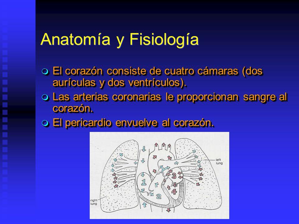 Anatomía y Fisiología El corazón consiste de cuatro cámaras (dos aurículas y dos ventrículos). El corazón consiste de cuatro cámaras (dos aurículas y