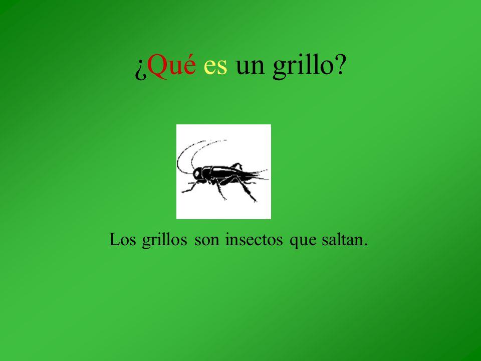 ¿Qué es un grillo? Los grillos son insectos que saltan.