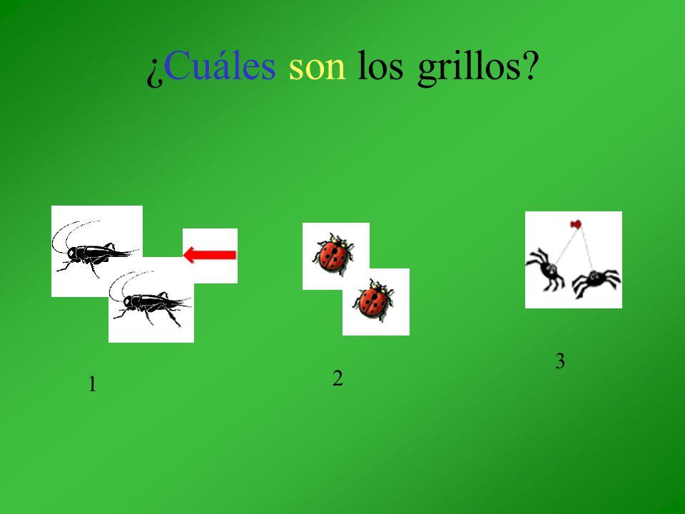 ¿Cuáles son los grillos? 1 2 3