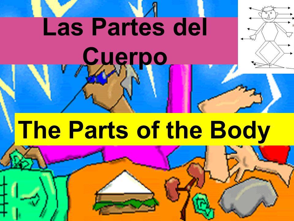 el estómago/ la barriga el pecho la piel la rodilla