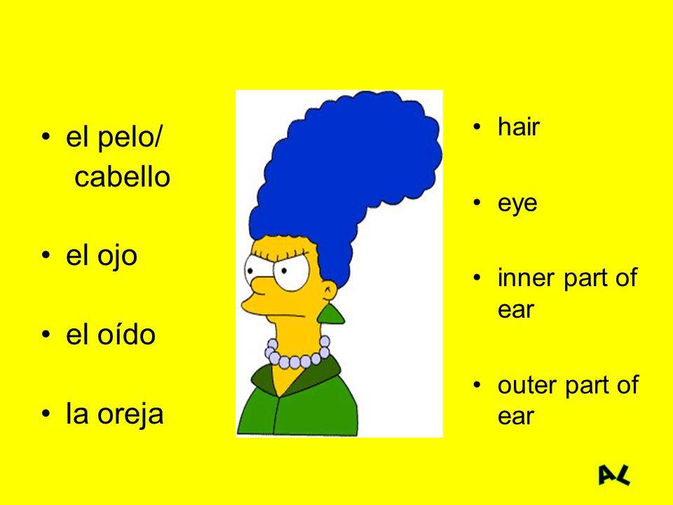 el pelo/ cabello el ojo el oído la oreja hair eye inner part of ear outer part of ear