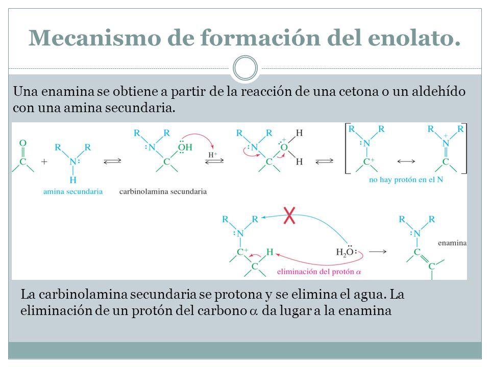 Mecanismo de formación del enolato. Una enamina se obtiene a partir de la reacción de una cetona o un aldehído con una amina secundaria. La carbinolam