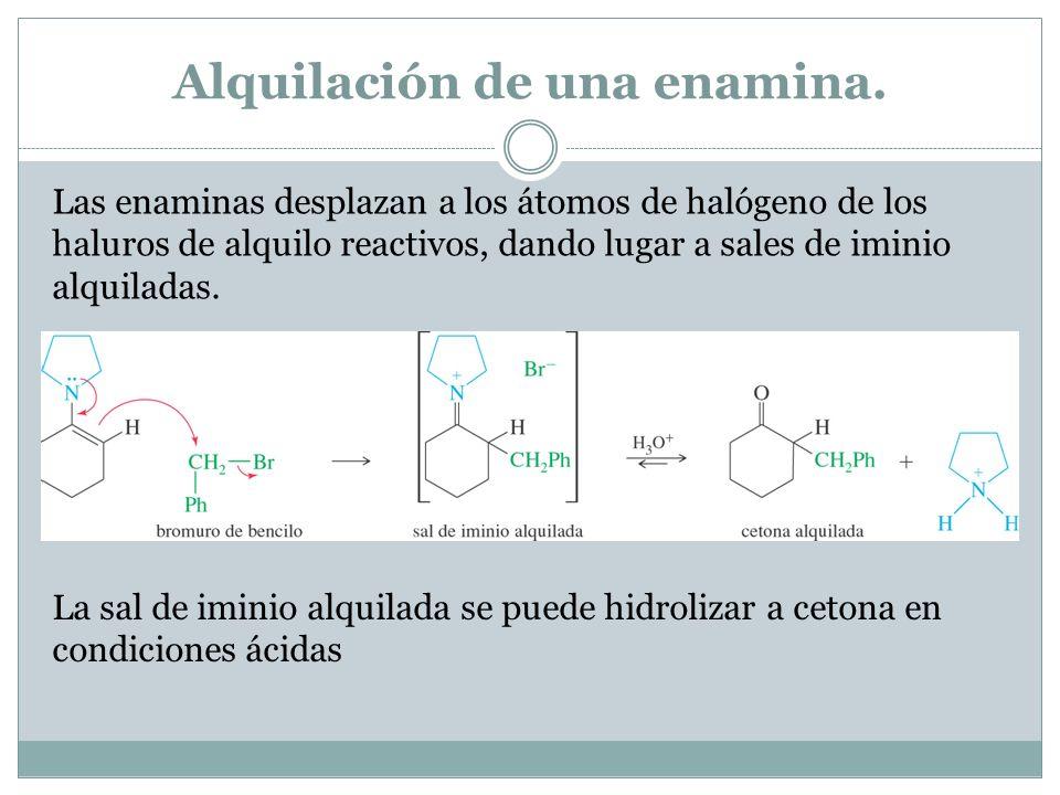 Alquilación de una enamina. Las enaminas desplazan a los átomos de halógeno de los haluros de alquilo reactivos, dando lugar a sales de iminio alquila