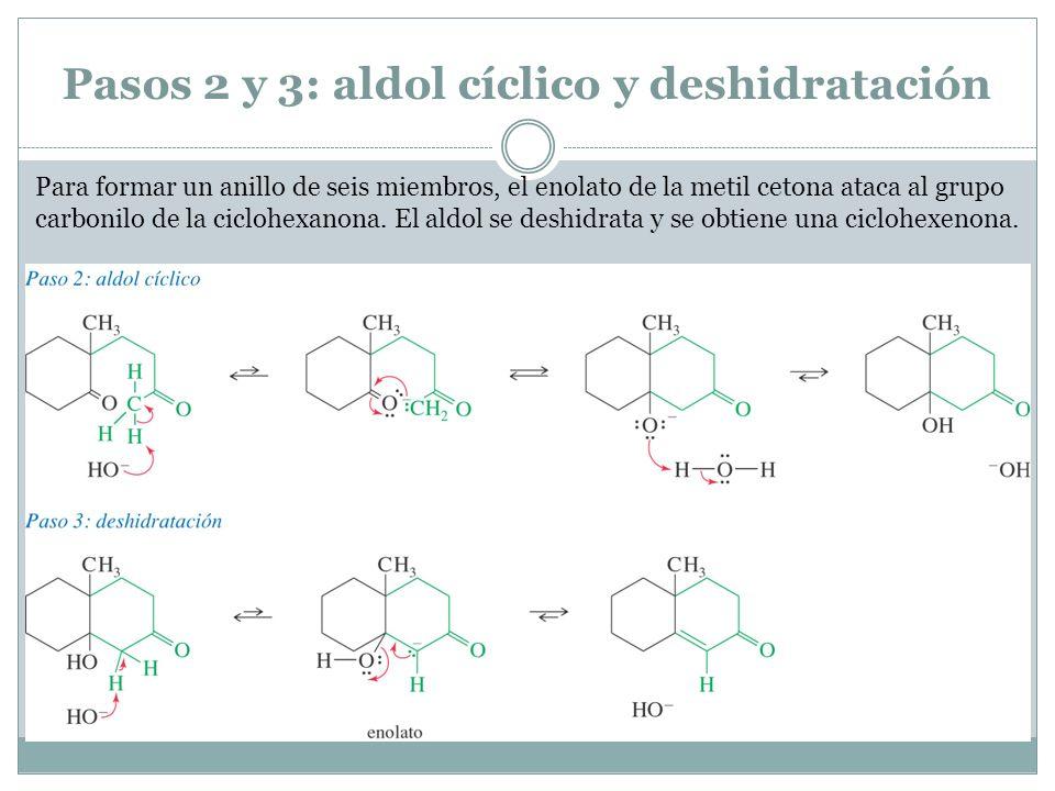 Pasos 2 y 3: aldol cíclico y deshidratación Para formar un anillo de seis miembros, el enolato de la metil cetona ataca al grupo carbonilo de la ciclo