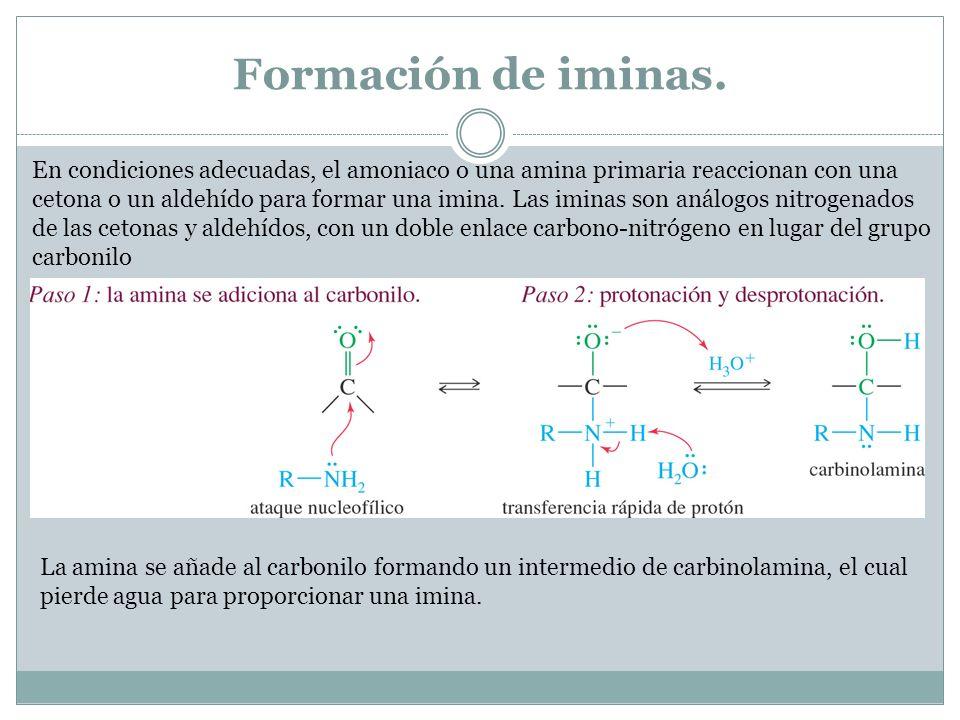 Formación de iminas. En condiciones adecuadas, el amoniaco o una amina primaria reaccionan con una cetona o un aldehído para formar una imina. Las imi