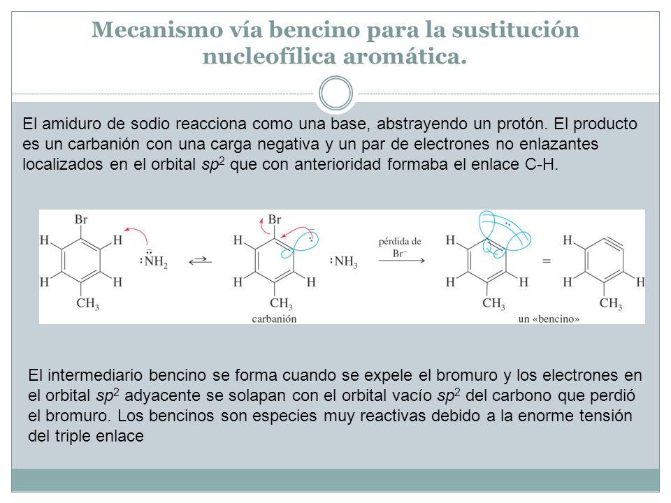 Mecanismo vía bencino para la sustitución nucleofílica aromática. El amiduro de sodio reacciona como una base, abstrayendo un protón. El producto es u