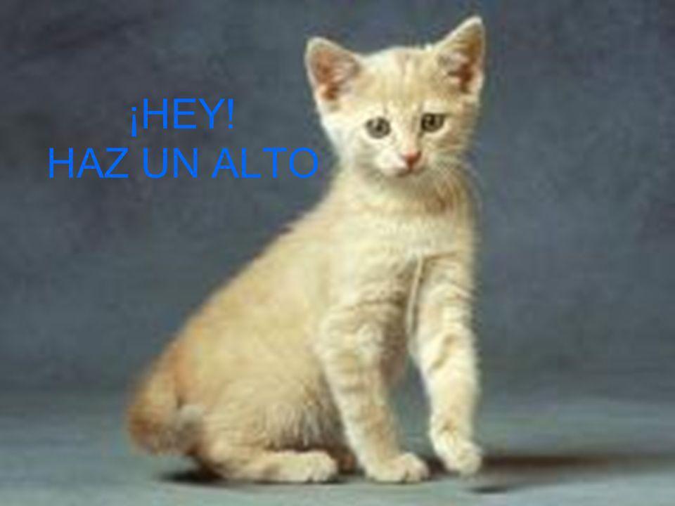 ¡HEY! HAZ UN ALTO