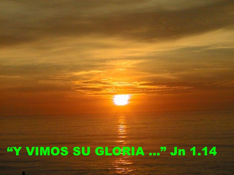 Y VIMOS SU GLORIA … Jn 1.14