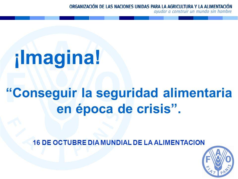 ¡Imagina! Conseguir la seguridad alimentaria en época de crisis. 16 DE OCTUBRE DIA MUNDIAL DE LA ALIMENTACION