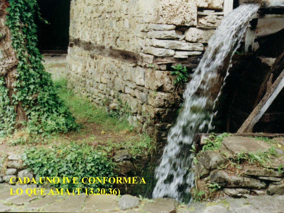 CADA UNO IVE CONFORME A LO QUE AMA (T 13,20,36)
