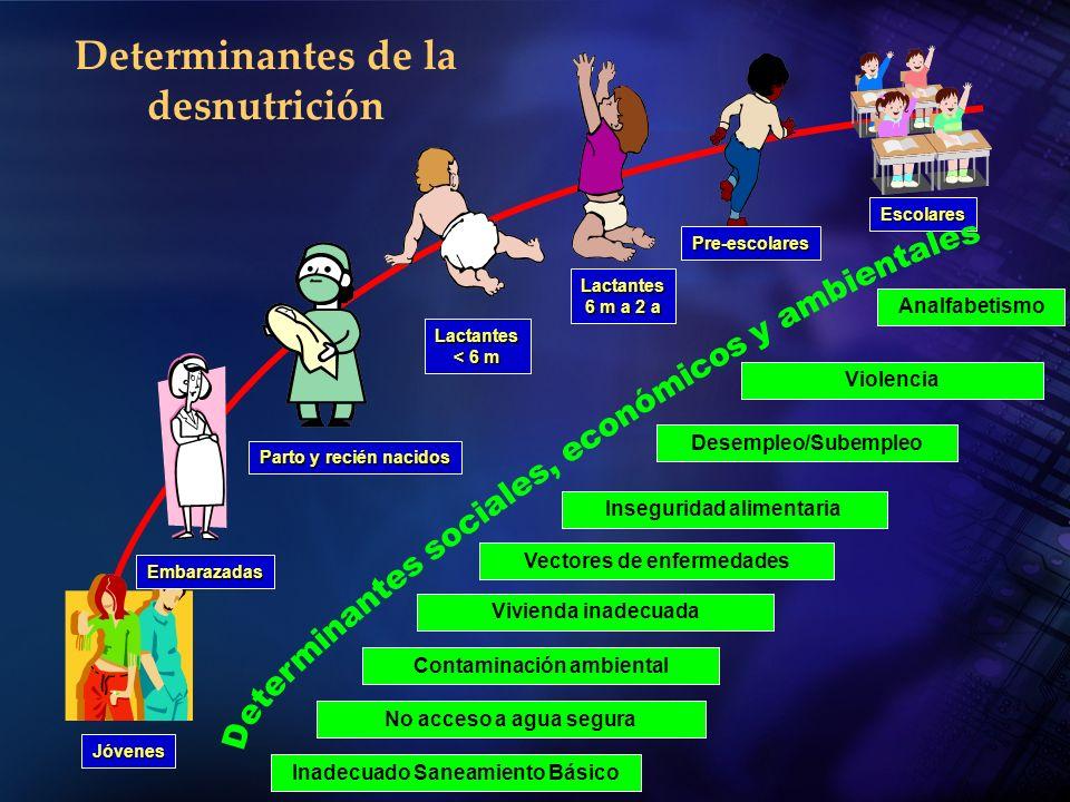 Determinantes de la desnutrición Jóvenes Embarazadas Lactantes 6 m a 2 a Pre-escolares Escolares Lactantes < 6 m Parto y recién nacidos Analfabetismo