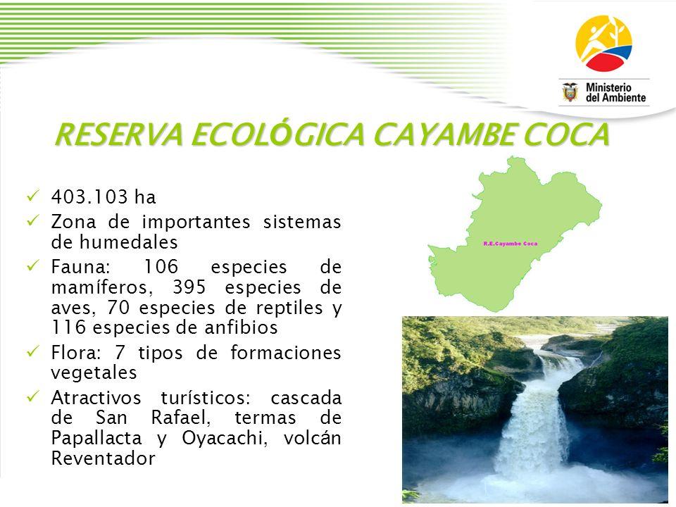 RESERVA ECOL Ó GICA CAYAMBE COCA 403.103 ha Zona de importantes sistemas de humedales Fauna: 106 especies de mam í feros, 395 especies de aves, 70 esp