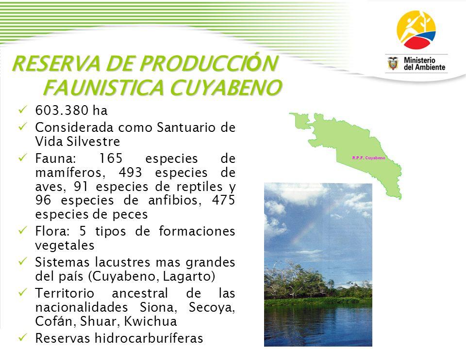 RESERVA DE PRODUCCI Ó N FAUNISTICA CUYABENO 603.380 ha Considerada como Santuario de Vida Silvestre Fauna: 165 especies de mam í feros, 493 especies d