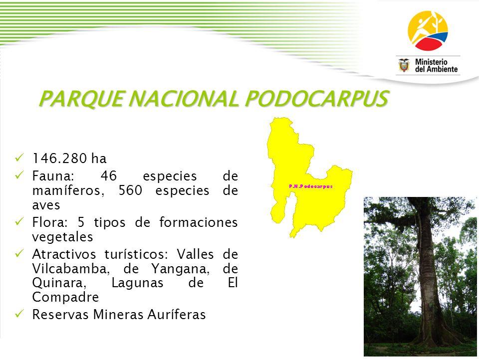 PARQUE NACIONAL PODOCARPUS 146.280 ha Fauna: 46 especies de mam í feros, 560 especies de aves Flora: 5 tipos de formaciones vegetales Atractivos tur í