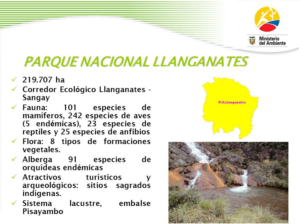 PARQUE NACIONAL LLANGANATES 219.707 ha Corredor Ecol ó gico Llanganates - Sangay Fauna: 101 especies de mam í feros, 242 especies de aves (5 end é mic
