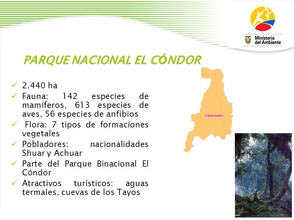 PARQUE NACIONAL EL C Ó NDOR 2.440 ha Fauna: 142 especies de mam í feros, 613 especies de aves, 56 especies de anfibios Flora: 7 tipos de formaciones v