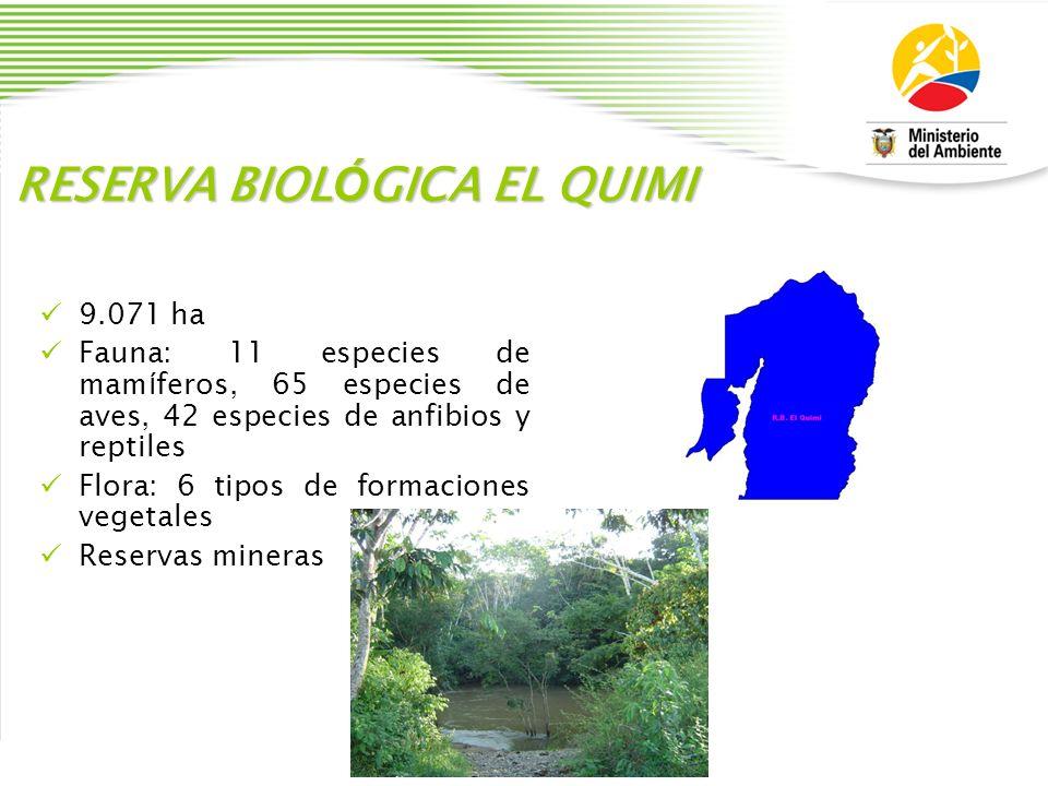RESERVA BIOL Ó GICA EL QUIMI 9.071 ha Fauna: 11 especies de mam í feros, 65 especies de aves, 42 especies de anfibios y reptiles Flora: 6 tipos de for