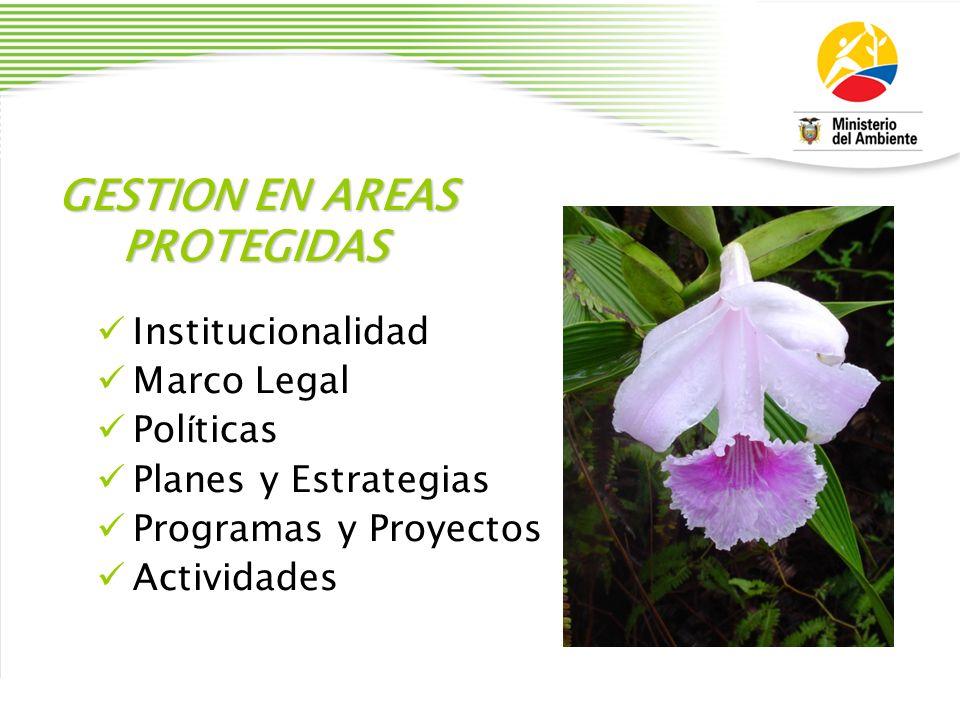 GESTION EN AREAS PROTEGIDAS Institucionalidad Marco Legal Pol í ticas Planes y Estrategias Programas y Proyectos Actividades