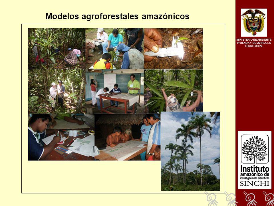 Modelos agroforestales amazónicos MINISTERIO DE AMBIENTE VIVIENDA Y DESARROLLO TERRITORIAL