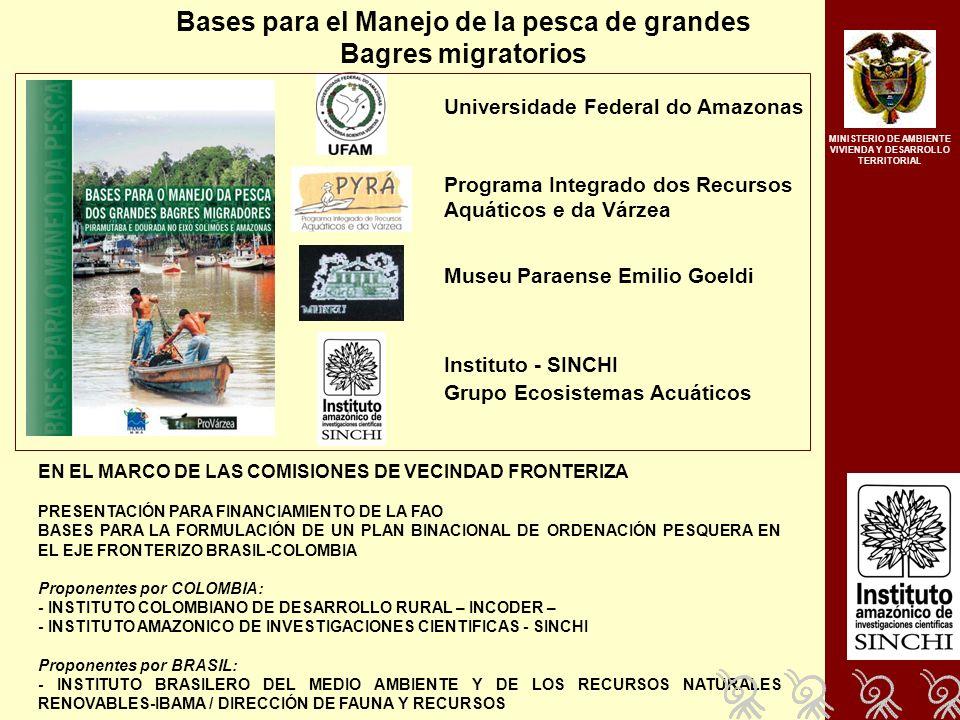 Bases para el Manejo de la pesca de grandes Bagres migratorios Universidade Federal do Amazonas Instituto - SINCHI Grupo Ecosistemas Acuáticos Programa Integrado dos Recursos Aquáticos e da Várzea Museu Paraense Emilio Goeldi EN EL MARCO DE LAS COMISIONES DE VECINDAD FRONTERIZA PRESENTACIÓN PARA FINANCIAMIENTO DE LA FAO BASES PARA LA FORMULACIÓN DE UN PLAN BINACIONAL DE ORDENACIÓN PESQUERA EN EL EJE FRONTERIZO BRASIL-COLOMBIA Proponentes por COLOMBIA: - INSTITUTO COLOMBIANO DE DESARROLLO RURAL – INCODER – - INSTITUTO AMAZONICO DE INVESTIGACIONES CIENTIFICAS - SINCHI Proponentes por BRASIL: - INSTITUTO BRASILERO DEL MEDIO AMBIENTE Y DE LOS RECURSOS NATURALES RENOVABLES-IBAMA / DIRECCIÓN DE FAUNA Y RECURSOS MINISTERIO DE AMBIENTE VIVIENDA Y DESARROLLO TERRITORIAL