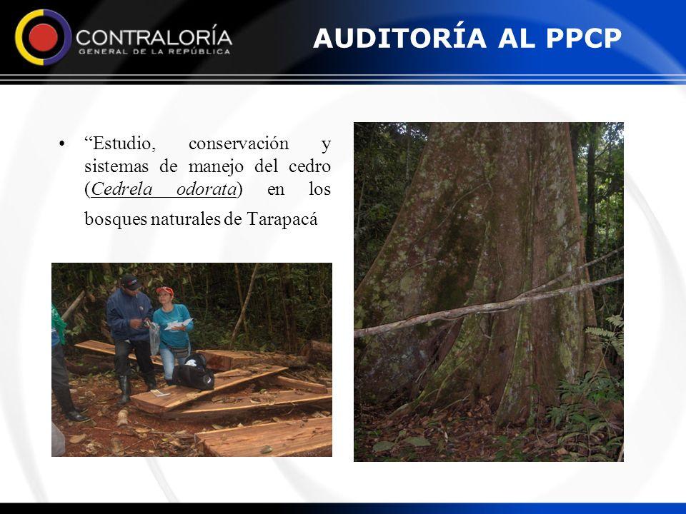 AUDITORÍA AL PPCP Estudio, conservación y sistemas de manejo del cedro (Cedrela odorata) en los bosques naturales de Tarapacá