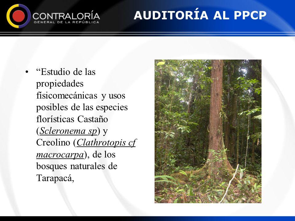 AUDITORÍA AL PPCP Estudio de las propiedades físicomecánicas y usos posibles de las especies florísticas Castaño (Scleronema sp) y Creolino (Clathroto