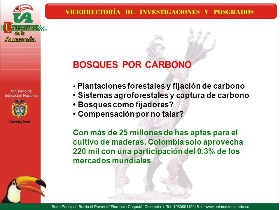 VICERRECTORÍA DE INVESTIGACIONES Y POSGRADOS BOSQUES POR CARBONO Plantaciones forestales y fijación de carbono Sistemas agroforestales y captura de ca
