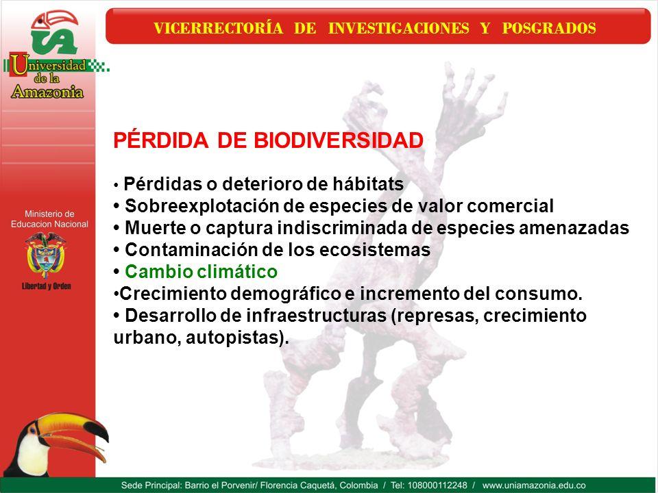 VICERRECTORÍA DE INVESTIGACIONES Y POSGRADOS PÉRDIDA DE BIODIVERSIDAD Pérdidas o deterioro de hábitats Sobreexplotación de especies de valor comercial