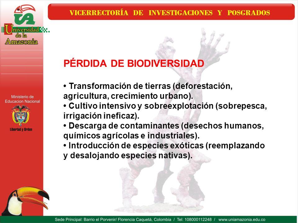 VICERRECTORÍA DE INVESTIGACIONES Y POSGRADOS PÉRDIDA DE BIODIVERSIDAD Transformación de tierras (deforestación, agricultura, crecimiento urbano). Cult
