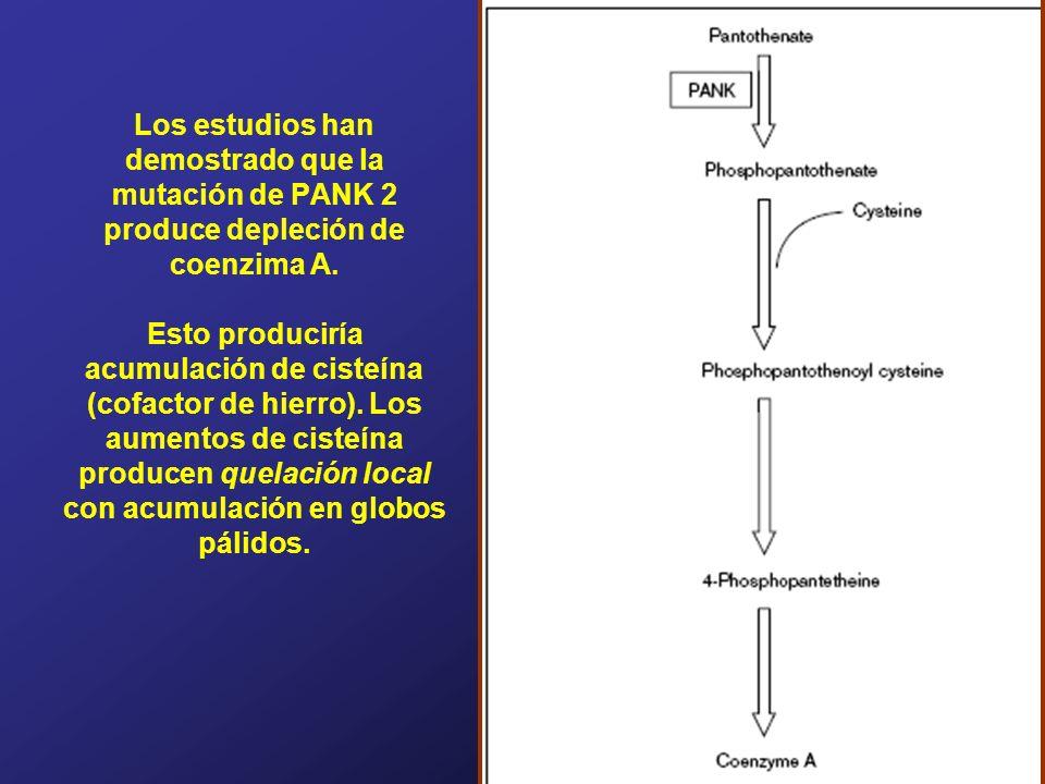 Los estudios han demostrado que la mutación de PANK 2 produce depleción de coenzima A. Esto produciría acumulación de cisteína (cofactor de hierro). L