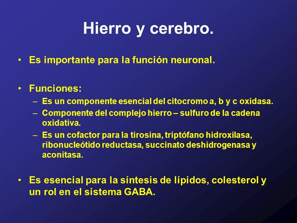 Hierro y cerebro. Es importante para la función neuronal. Funciones: –Es un componente esencial del citocromo a, b y c oxidasa. –Componente del comple