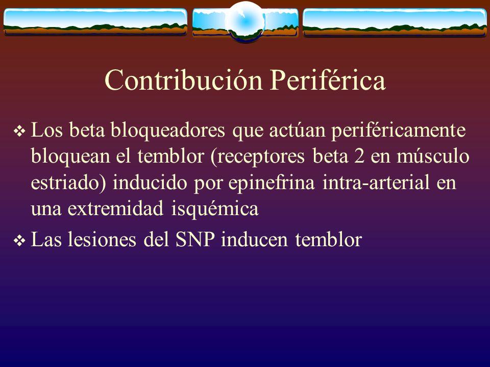 Contribución Periférica Los beta bloqueadores que actúan periféricamente bloquean el temblor (receptores beta 2 en músculo estriado) inducido por epin