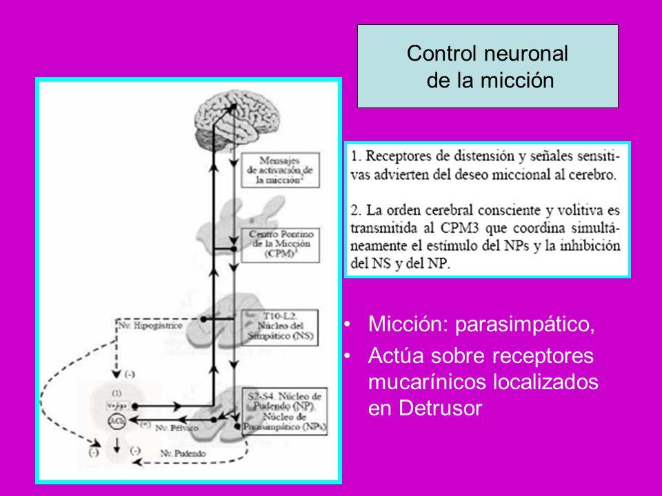Enf.Parkinson y disfunción vesical PREVALENCIA Parkinsonismos (AMS) 38 a 71% Enf.