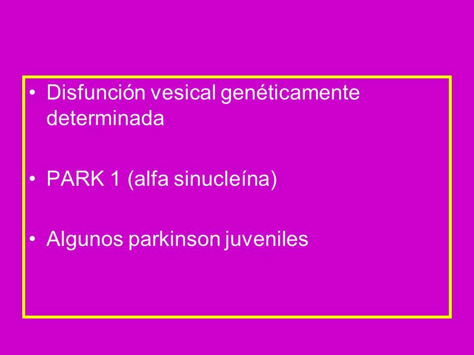 Disfunción vesical genéticamente determinada PARK 1 (alfa sinucleína) Algunos parkinson juveniles