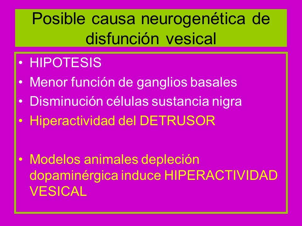 Receptores dopaminérgicos D1 inhibición micción refleja D2 facilita micción Degeneración neuronas dopaminérgicas de SN y del estriado llevan incapacidad de D1 hiperactividad del detrusor Consecuencia orinarse