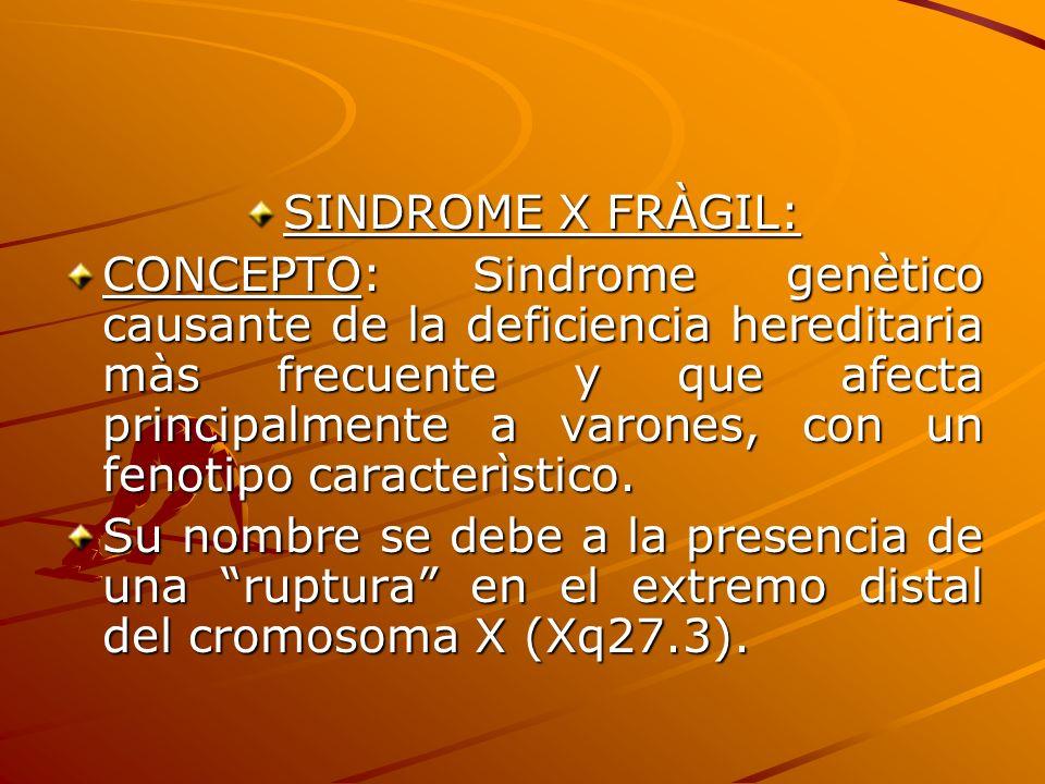 SINDROME X FRÀGIL: CONCEPTO: Sindrome genètico causante de la deficiencia hereditaria màs frecuente y que afecta principalmente a varones, con un feno