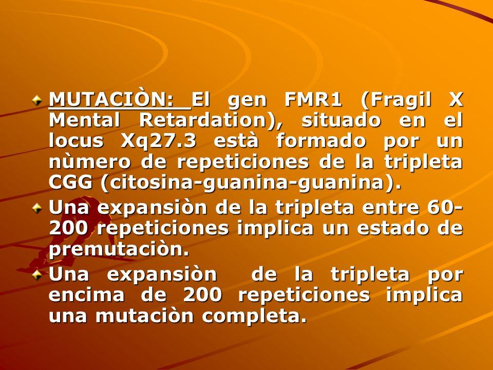 MUTACIÒN: El gen FMR1 (Fragil X Mental Retardation), situado en el locus Xq27.3 està formado por un nùmero de repeticiones de la tripleta CGG (citosin