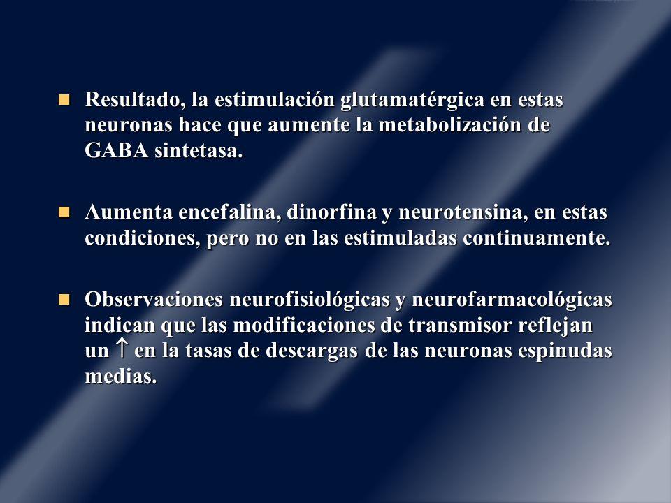 Resultado, la estimulación glutamatérgica en estas neuronas hace que aumente la metabolización de GABA sintetasa. Resultado, la estimulación glutamaté