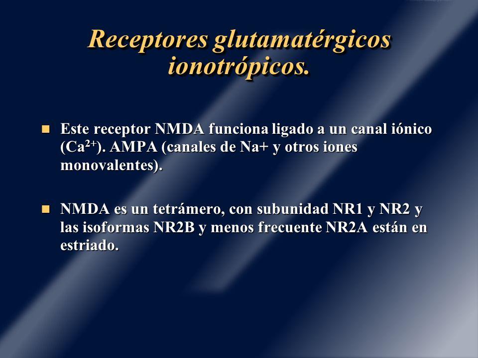 Receptores glutamatérgicos ionotrópicos. Este receptor NMDA funciona ligado a un canal iónico (Ca 2+ ). AMPA (canales de Na+ y otros iones monovalente