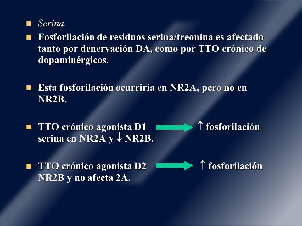 Serina. Serina. Fosforilación de residuos serina/treonina es afectado tanto por denervación DA, como por TTO crónico de dopaminérgicos. Fosforilación