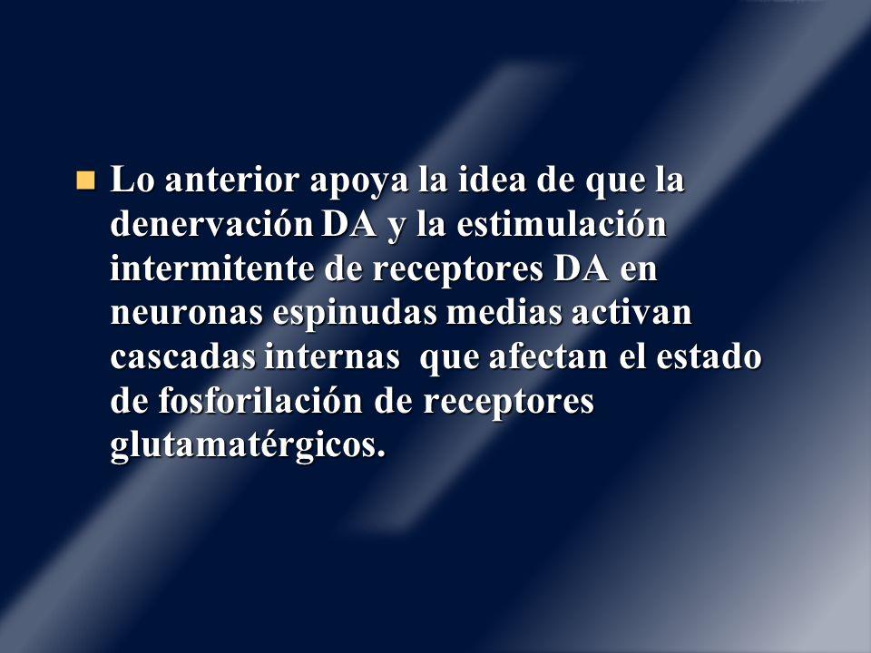 Lo anterior apoya la idea de que la denervación DA y la estimulación intermitente de receptores DA en neuronas espinudas medias activan cascadas inter